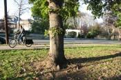 Jon Watts and his Xtracycle Radish 21